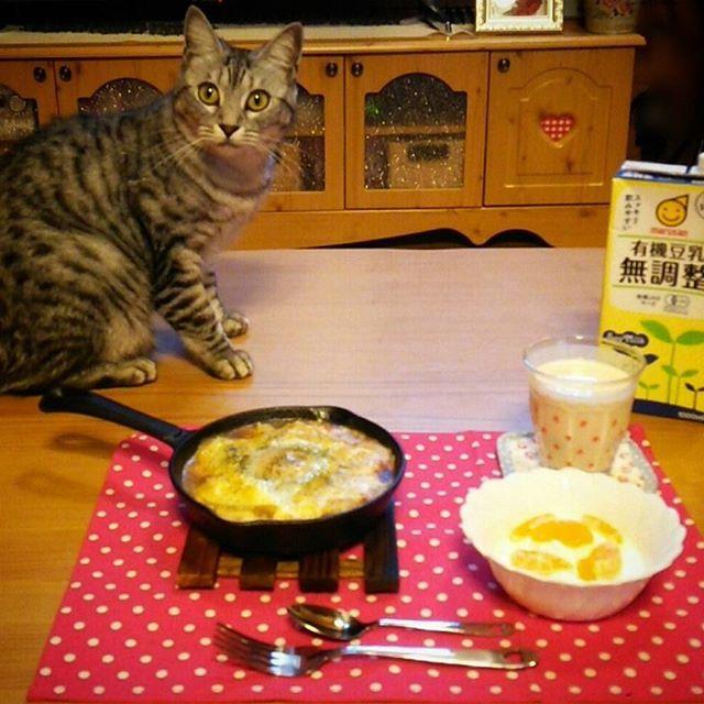 今日の#ランチ  昨日の残ったカレーで♡  #焼きカレー #ヨーグルト#みかん のせ #豆乳 #スキレット #鉄スキ #おうちごはん #lunch #余り物#リメイク  #猫 #ねこ #愛猫 #サバトラ #ニャンコ #にゃんこ #ねこ部 #lovecat #catlove #catstagram #kitty #whitecat #kawaii #ねこすたぐらむ #にゃんすたぐらむ #猫ばか #元野良猫 #猫中心 #猫好き