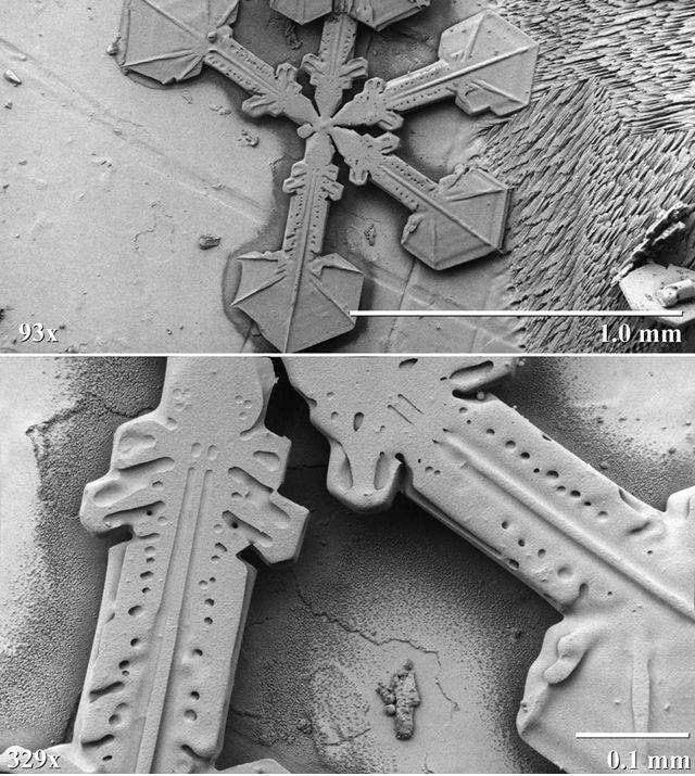 特殊な電子顕微鏡で撮影された雪の結晶