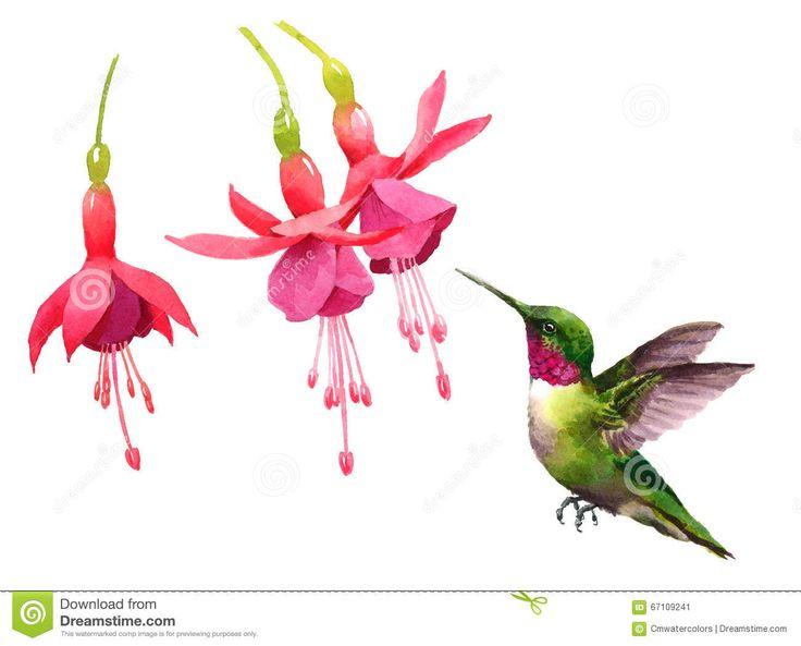 Hummingbird Illustration — Crafthubs