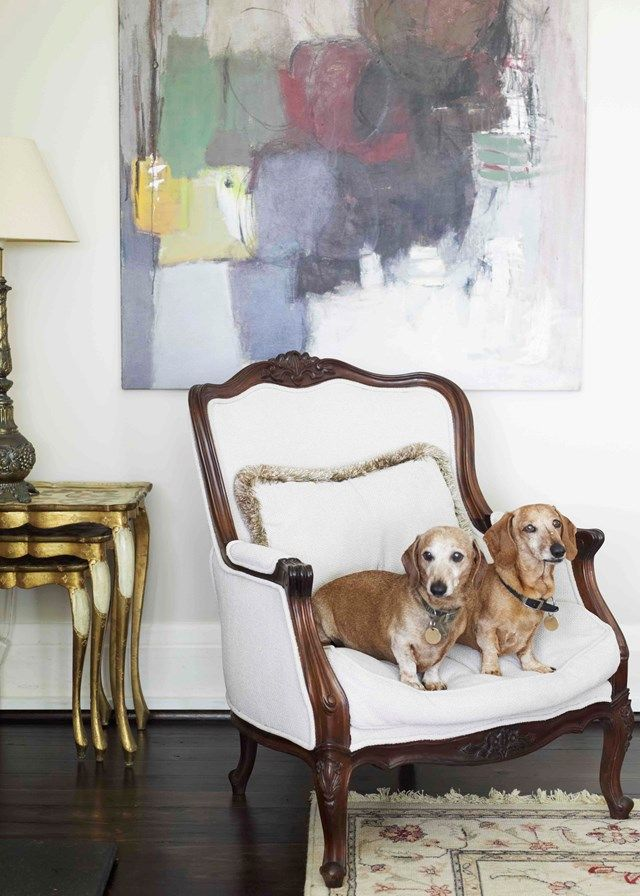 Archie and Henry - Leona Edmiston's Dachshunds  | Home Beautiful Magazine Australia