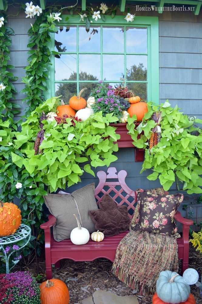 Transition Summer Window Boxes to Fall With Pumpkins