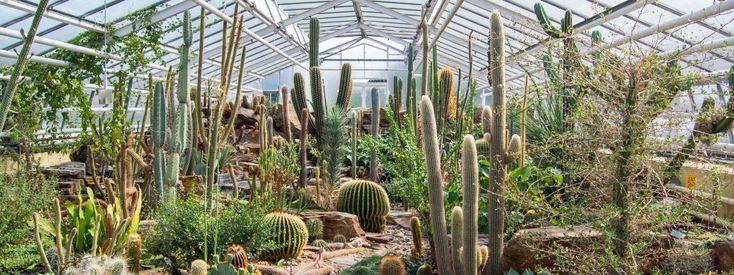 Kakteen im Glashaus des Botanischen Garten München