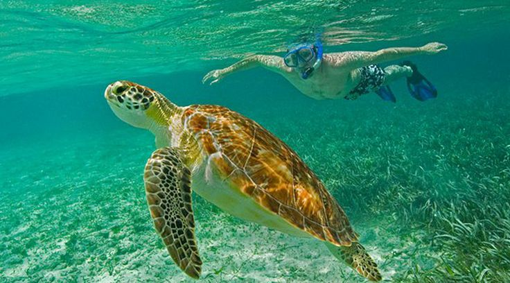 Snorkeling Belize's Barrier Reef with Ka'ana Resort #adventure #bespoke #xoBelize