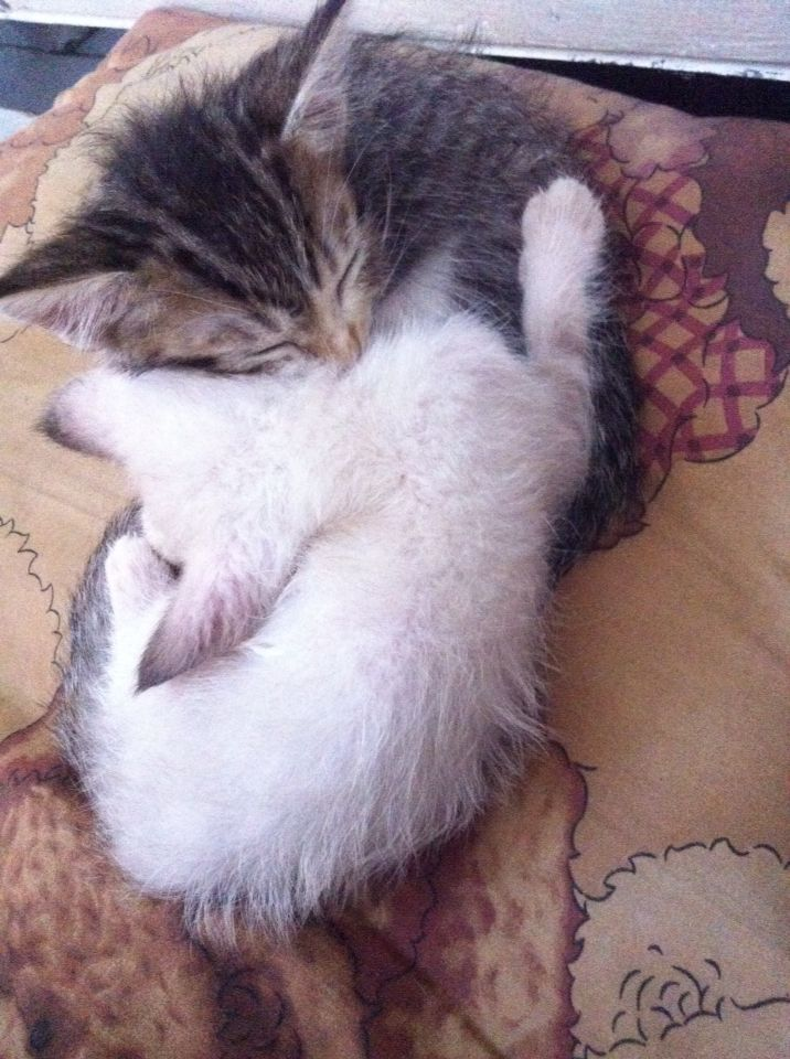 Hug me plzz brotherr