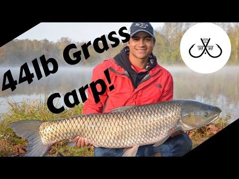 Lake Nelson: 44lb Grass Carp and More! - YouTube
