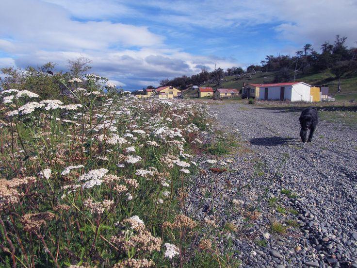 Isla riesco..Magallanes:Chile!