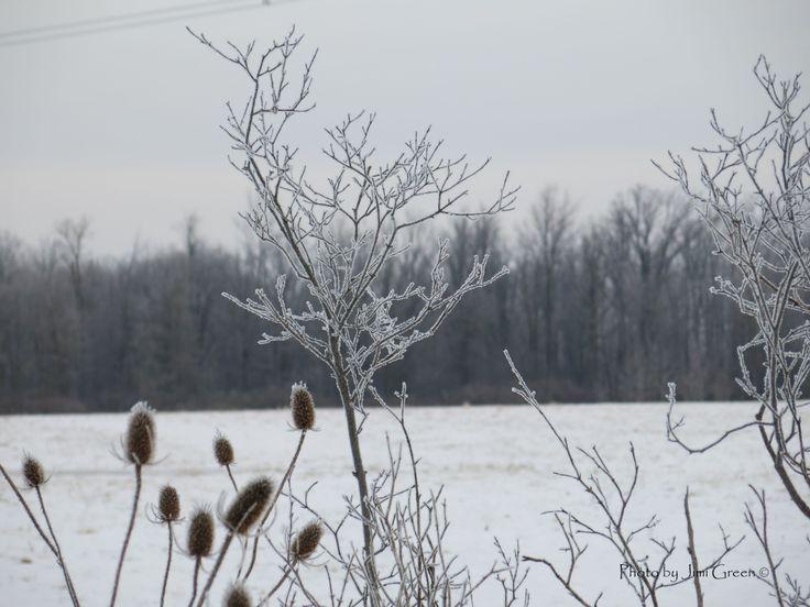 Frosty morning..