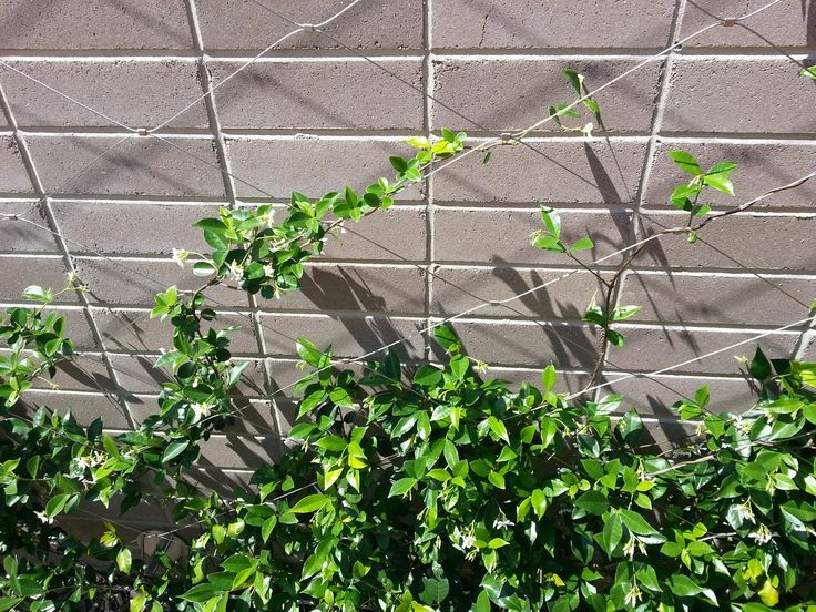 Jacob Inox Wire Climbing Plants Google Search L