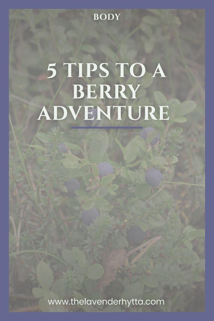 Berry Picking | Harvesting | Wild | Hiking | Berries| Adventure via /lavenderhytta/
