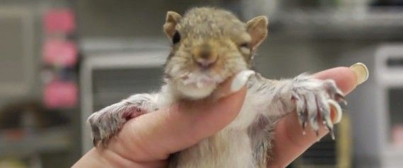 This Is The Cutest Baby Squirrel Video You'll See Today