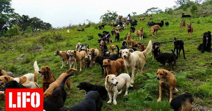 Ένα παλιό αγρόκτημα στην Κόστα Ρίκα έχει μετατραπεί σε ένα ζεστό καταφύγιο «για την ευημερία και το σεβασμό των ζώων»