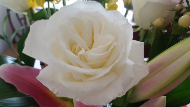 like a white rose, purify your heart and soul.
