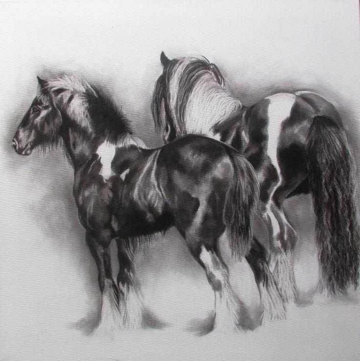 Gypsy Cob Stallion and son