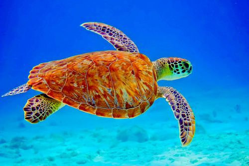 "30 Stunning Pictures Of Sea Turtles..They are such GORGEOUS creatures! ""Birds of the Sea"" ♥"
