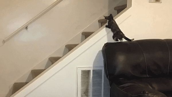 20 gatos fotografados no momento exato