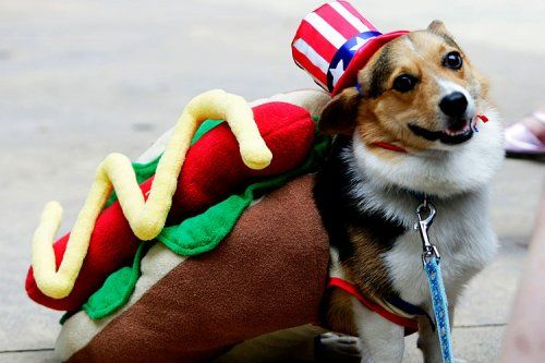 All-American hot dog | Animals :) | Pinterest