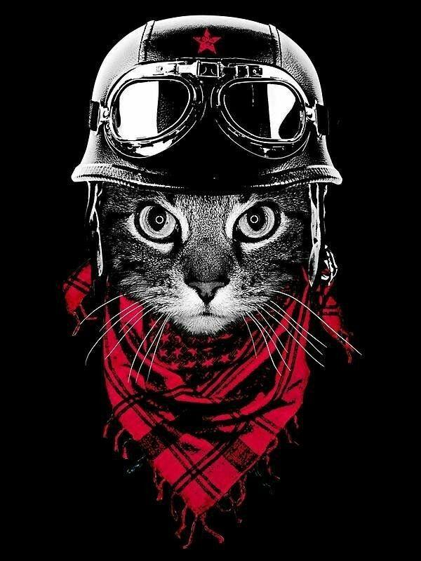 картинки крутого кота рисунки что общем снимке