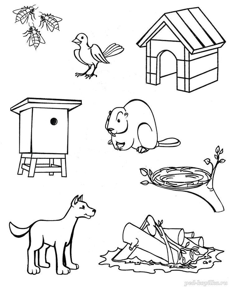 говоря кто где живет дикие животные соедини картинки это убирать