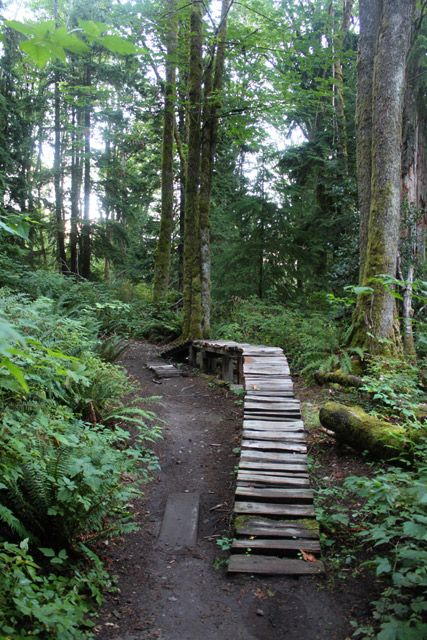Excellent options for hiking trails on Burnaby Mountain.