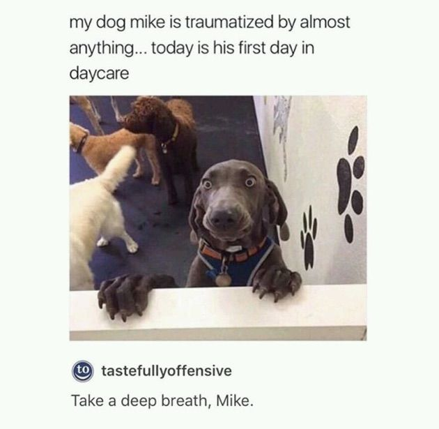 Funny Animal Dump