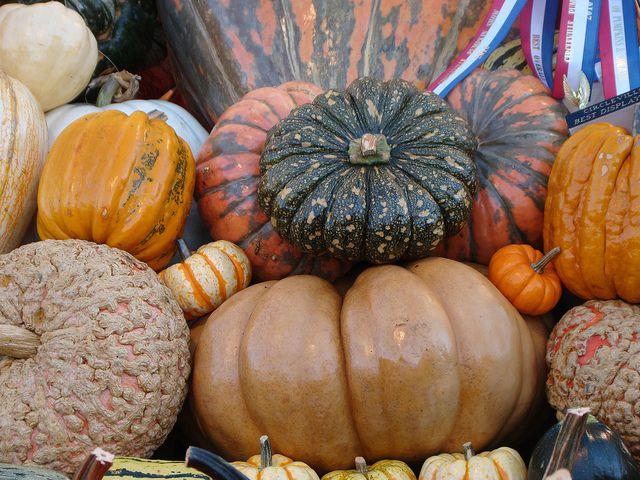 Circleville Pumpkin Show 2010 ~ Ohio | Flickr - Photo Sharing!
