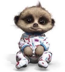 Baby Oleg the Meerkat