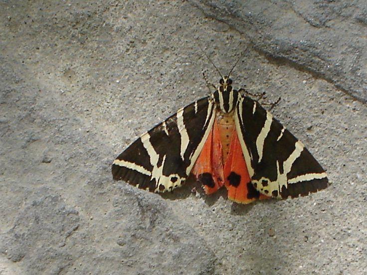 The Butterflies In Rhodes