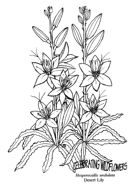 desert flower coloring pages - photo#25
