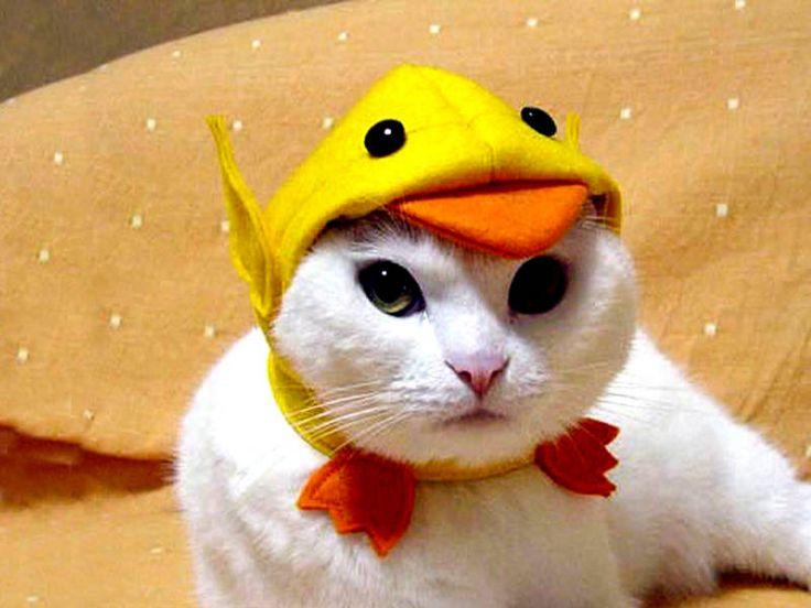 Quack! #Animal Hospital #Veterinarian #Pets #KAH #Vet #FrederickMaryland #Costumes #Halloween