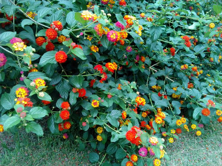 Flores de Otoño en Vigo bebetecavigo