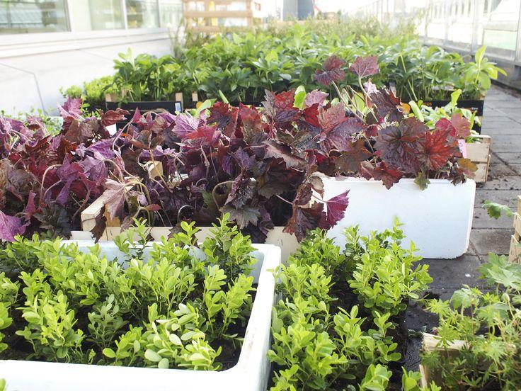 Our selection of plants for Klara Zenit's project, T Centralen, Stockholm.