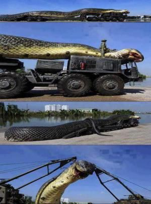Viral images purport to show an unbelievably large snake found and killed in the Red Sea by the Egyptian military.