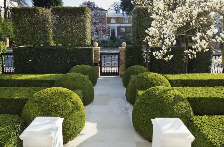 del Buono Gazerwitz Landscape Architecture - I love the magnolia withe this formal planting