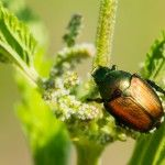 Controlling Gardening Pests – How To Control Common Pests In The Garden