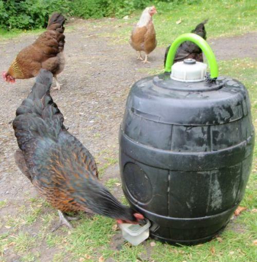 1000 ideen zu h hnertraktor auf pinterest h hnerst lle for Diy chicken feeder light