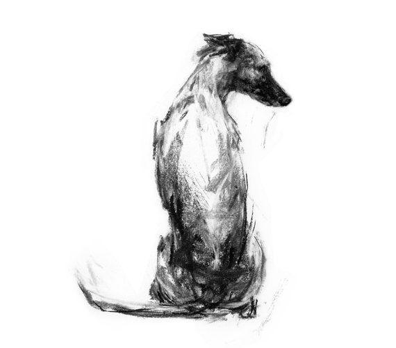 Whippet Sitting  fine art dog print by paintmydog on Etsy, £20.00