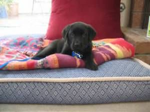 How to handle your puppy's first night at home (I'm already regretting this decision)