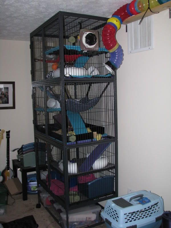 78 Images About Ferret Housing On Pinterest Guinea Pigs