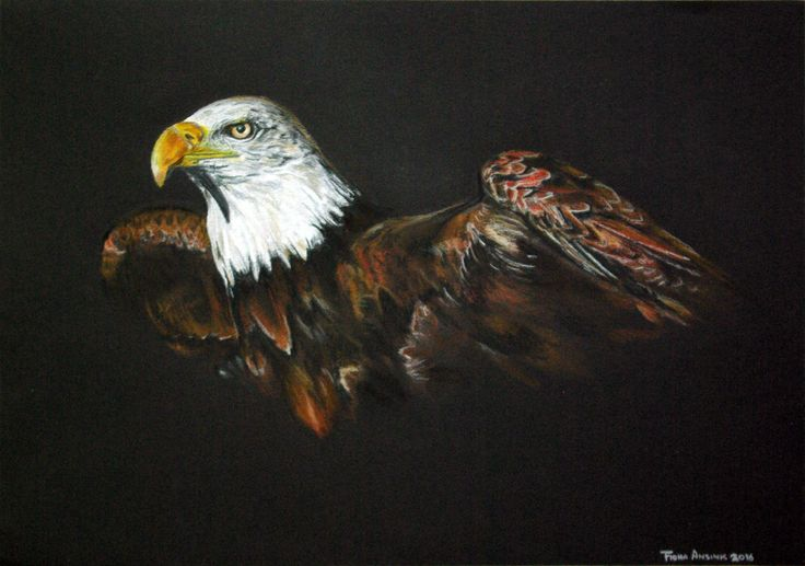 Eagle. Pastel and colour pencil drawing on black paper, by Fiona Ansink
