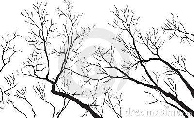 Bare Tree Branches - Vector File