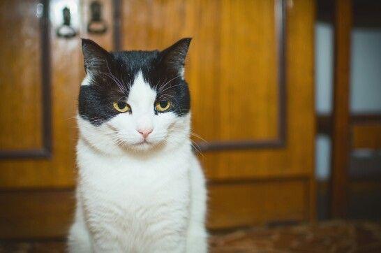 Cat, and his name is Marik