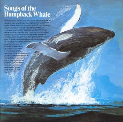 """Songs of the Humpback Whale delivers exactly what the title promises -- five humpback whale song recordings, including three """"solo whale"""" songs and two group recordings. In particular, the 16-minute """""""