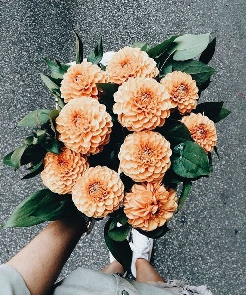 Image about nature in flowers 🌵 by szuwaxa on We Heart It