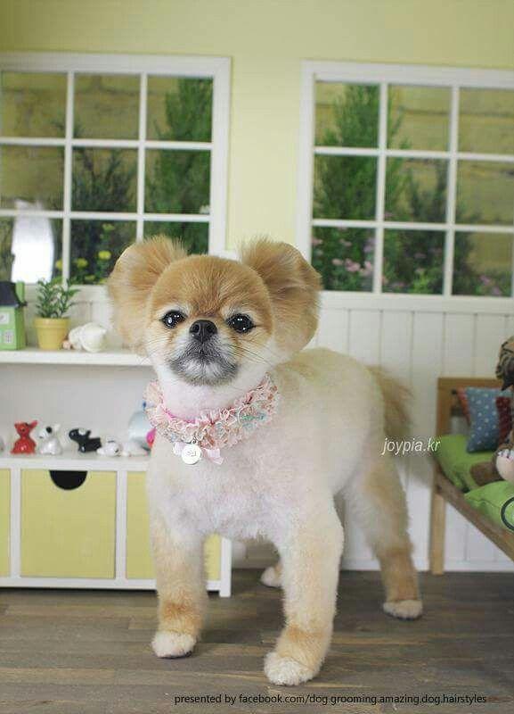 Amazing dog hairstyles