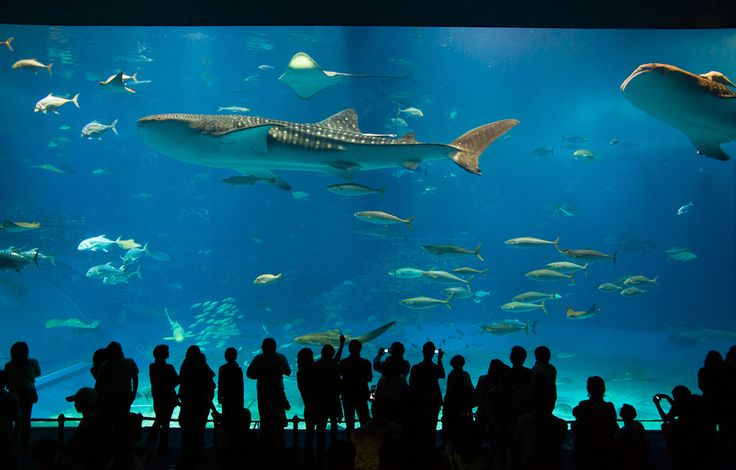 The Okinawa Churaumi Aquarium in Osaka, Japan   22 Destinations Science Nerds Need To See Before They Die