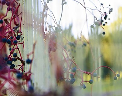 "Check out new work on my @Behance portfolio: ""Spectrum"" http://on.be.net/1H8OCKV"