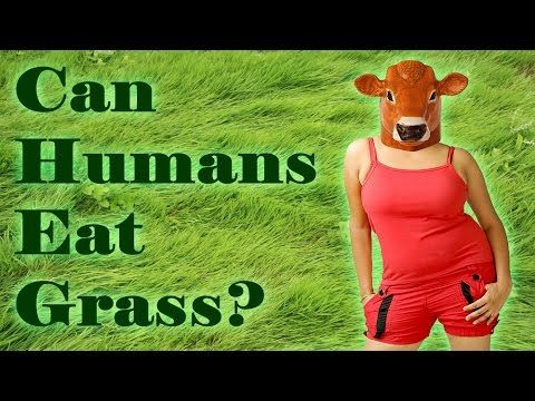 Can Hungry Humans Eat Grass?