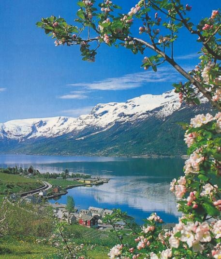 Flowering in the Hardangerfjord