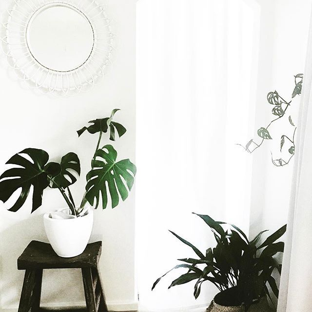 | H O M E | Our plant filled bedroom is looking so dreamy on this beautiful spring afternoon 🌿
