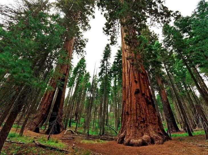 Национальный парк Секвойя, штат Калифорния.